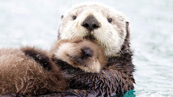 Otter hug1.jpg
